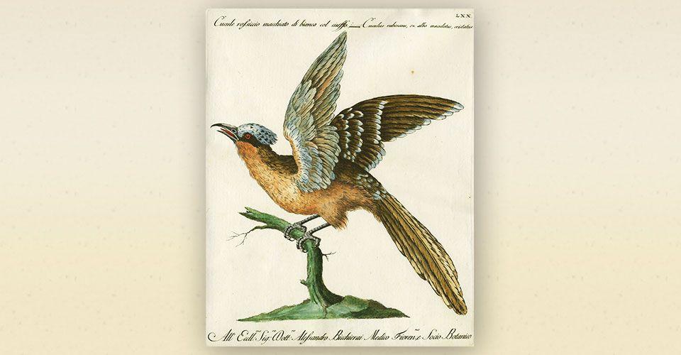 birdbook för 1,7 miljoner
