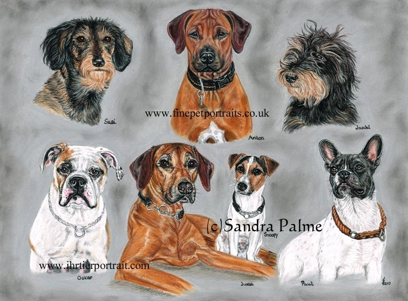 dog portrait montage Dog portraits, Dogs, Drawings