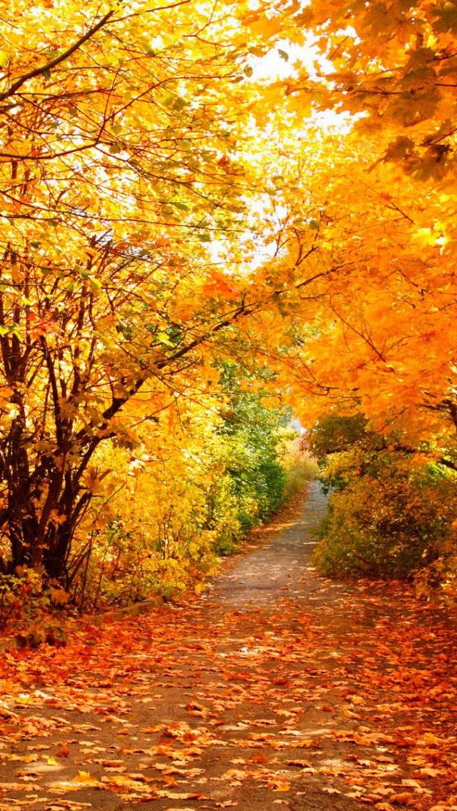 Iphone 5 Wallpapers Hd Falling Like Natural Scenery Backgrounds Image Automne Images Automne