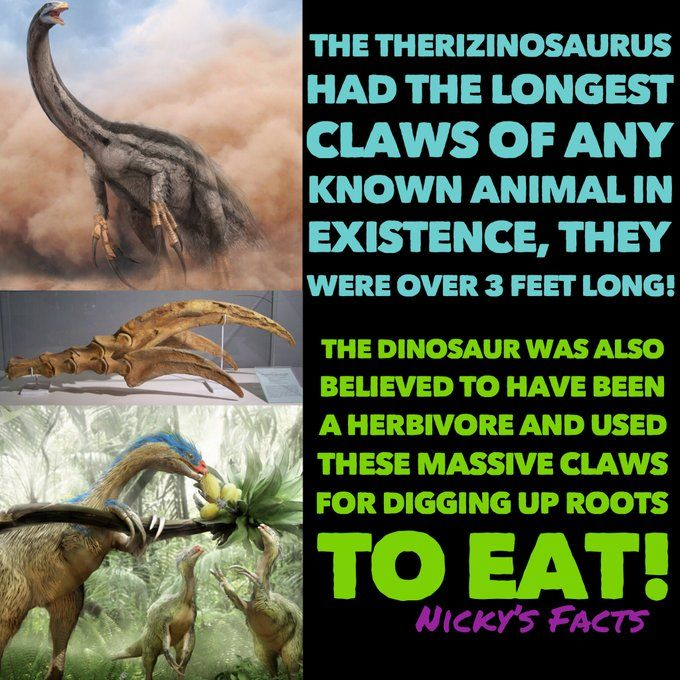 ‪I love the Therizinosaurus, it looks like a ferocious beast but is really a gentle giant!???????? ‬ ‪#dinosaurs #prehistoric #claws #history #walkingwithdinosaurs #thegiantclaw #dino #dinosaur #massiveclaws #herbivore #roots #historyofdinosaurs