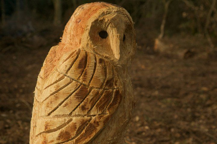 Coombe farm and woodlands trust devon owl chainsaw carved by