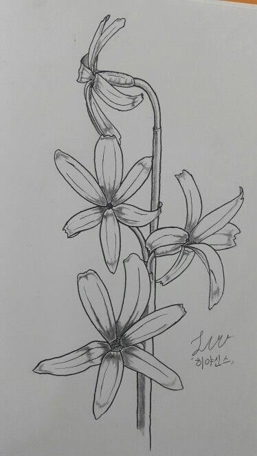 Hyacinth Flower Tattoo : hyacinth, flower, tattoo, 히야신스, Hyacinth, #tattoo, Tattoos,, Lotus, Flower, Tattoo,, Tattoo