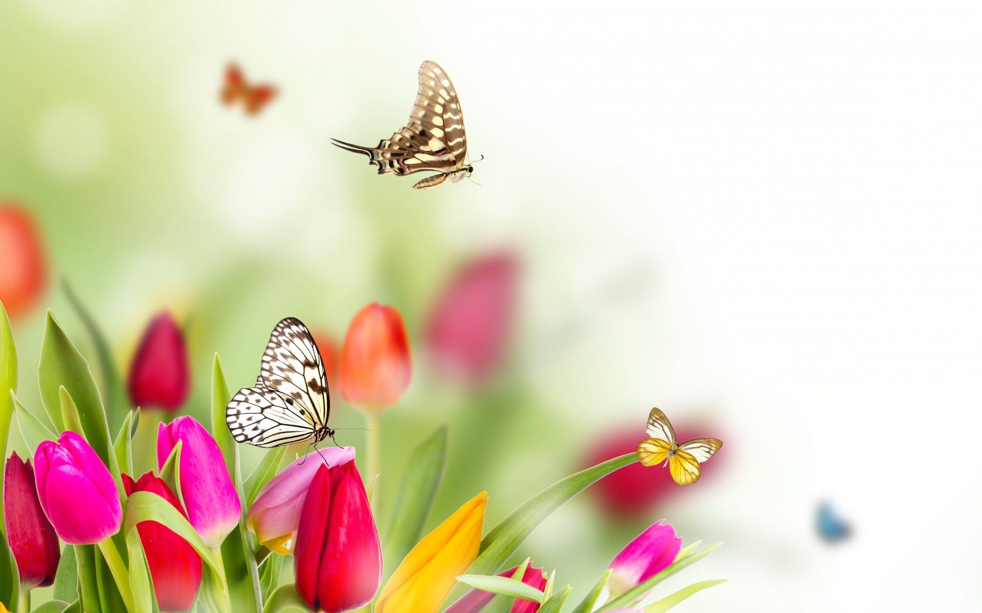 flower arrangements Flowers Wallpapers Download Free Spring