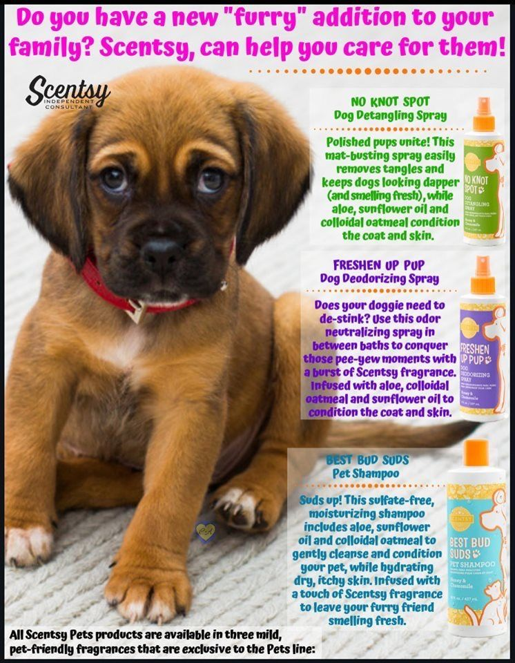 Best pet products for both cats and dogsscentsy pets in