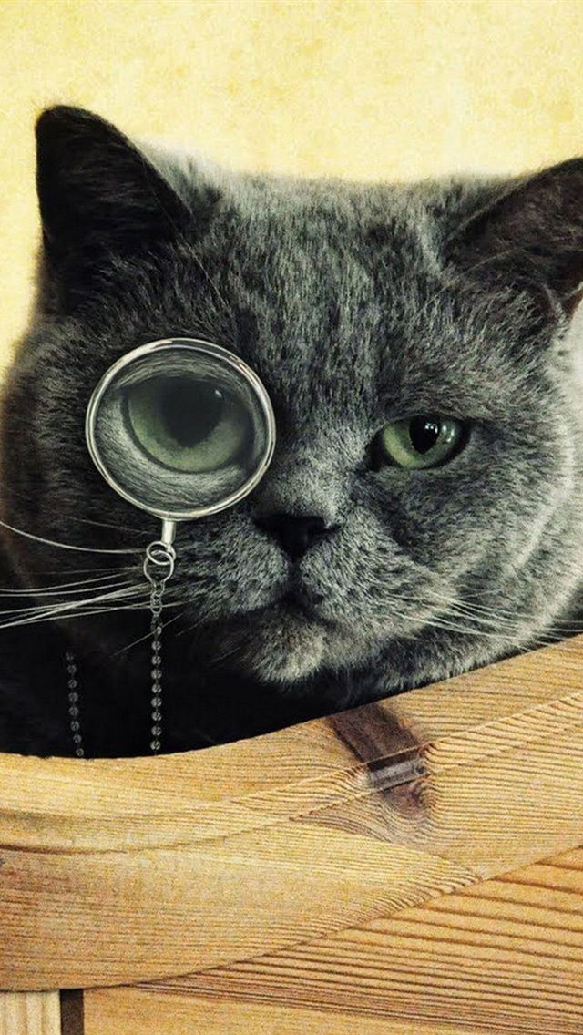 Funny Cat Monocle Glasses IPhone 5 Wallpaper