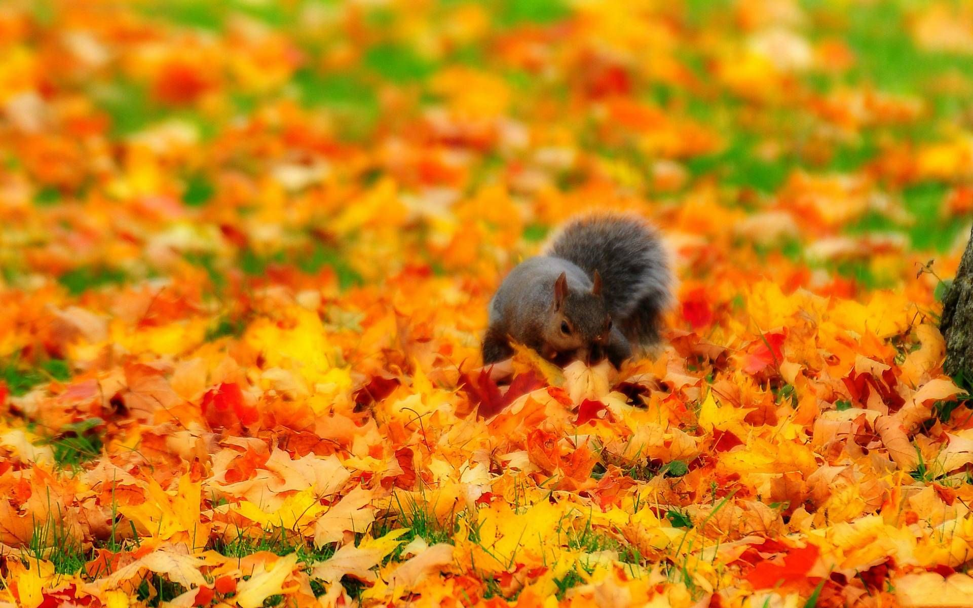 Chipmunk In Autumn Animals Wallpapers Fall Time Pictures Autumn Animals Animal Wallpaper