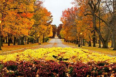 Main Drive in Tower Grove Park, St. Louis, Missouri