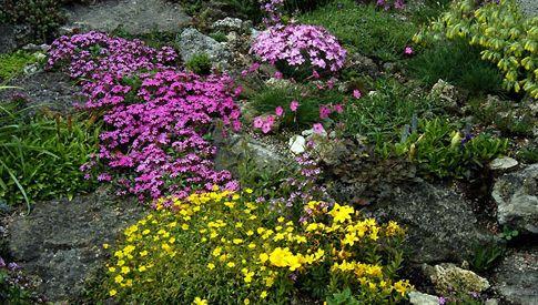 realizzare un giardino fai da te: i giardini rocciosi | giardino ... - Come Creare Un Giardino Fai Da Te