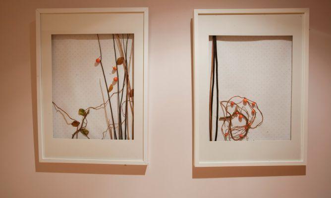 C mo hacer cuadros con elementos naturales decoraci n - Manualidades con cuadros ...