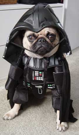Click Here To See Some Really Amazing Dog Star Wars Costumes And