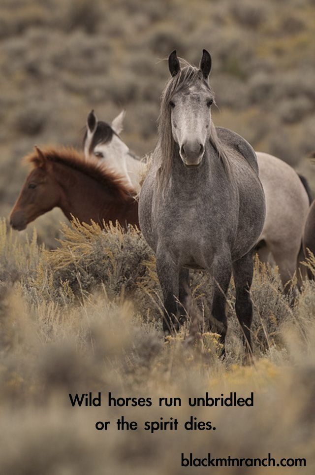Wild and Free let them be | Horses, Horse quotes, Wild ...