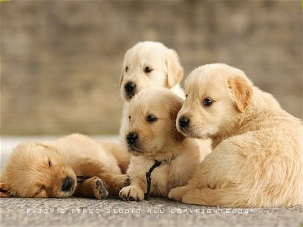 Pin By Jeanne Rasmussen On Dogs And Puppies Beautiful Puppy Cute Puppy Videos Puppies