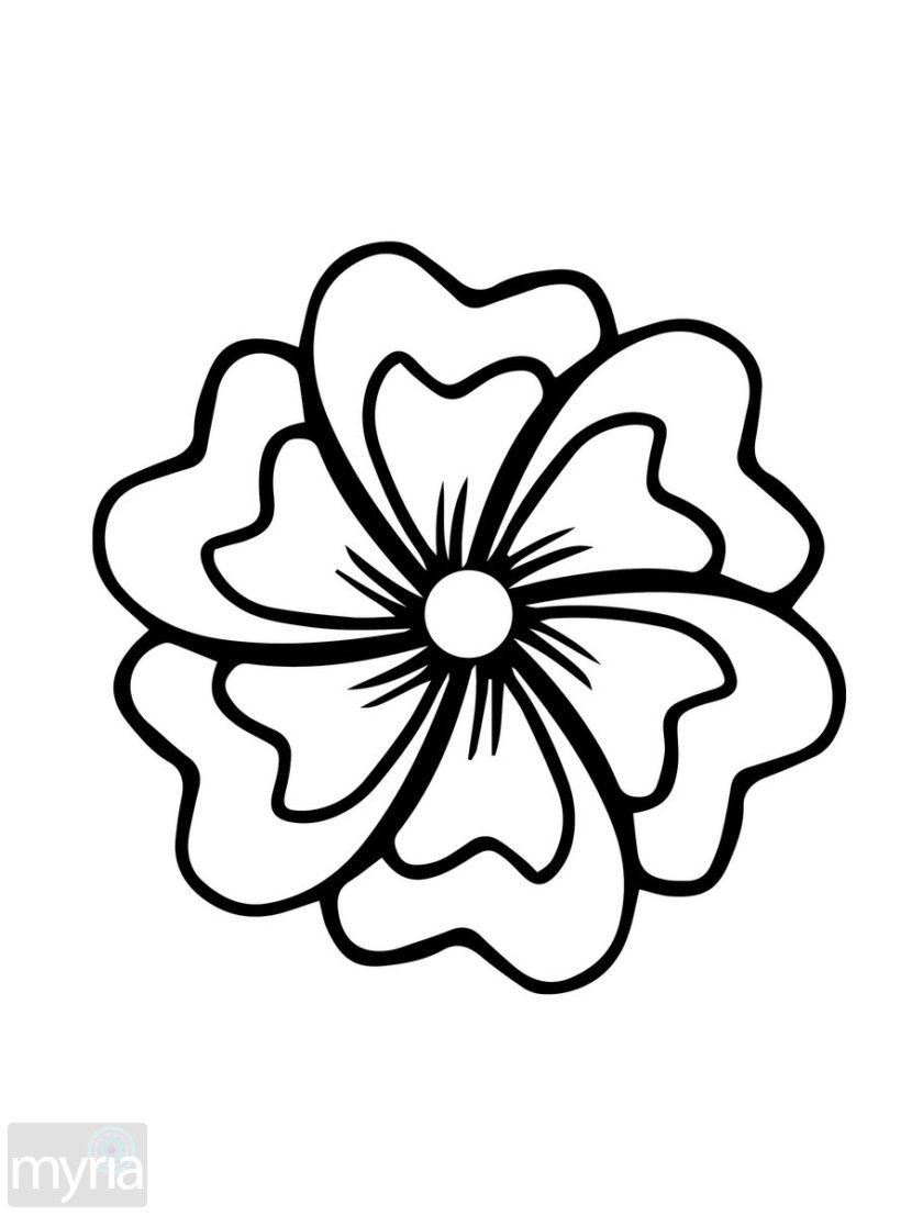 Related image (With images) Easy flower drawings
