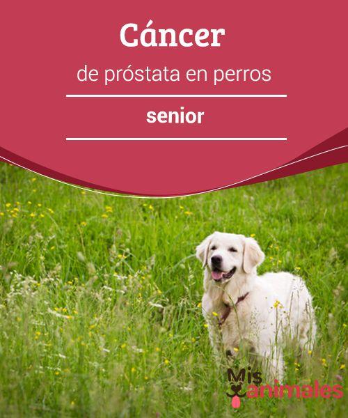 cancer de prostata en perros manifestări clinice ale condilomului