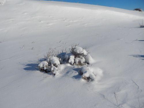 Fun Fact Friday: Tiny Sagebrush Seeds Use Winter...   My Public Lands http://mypubliclands.tumblr.com/post/157063744340/fun-fact-friday-tiny-sagebrush-seeds-use-winter?utm_campaign=crowdfire&utm_content=crowdfire&utm_medium=social&utm_source=pinterest