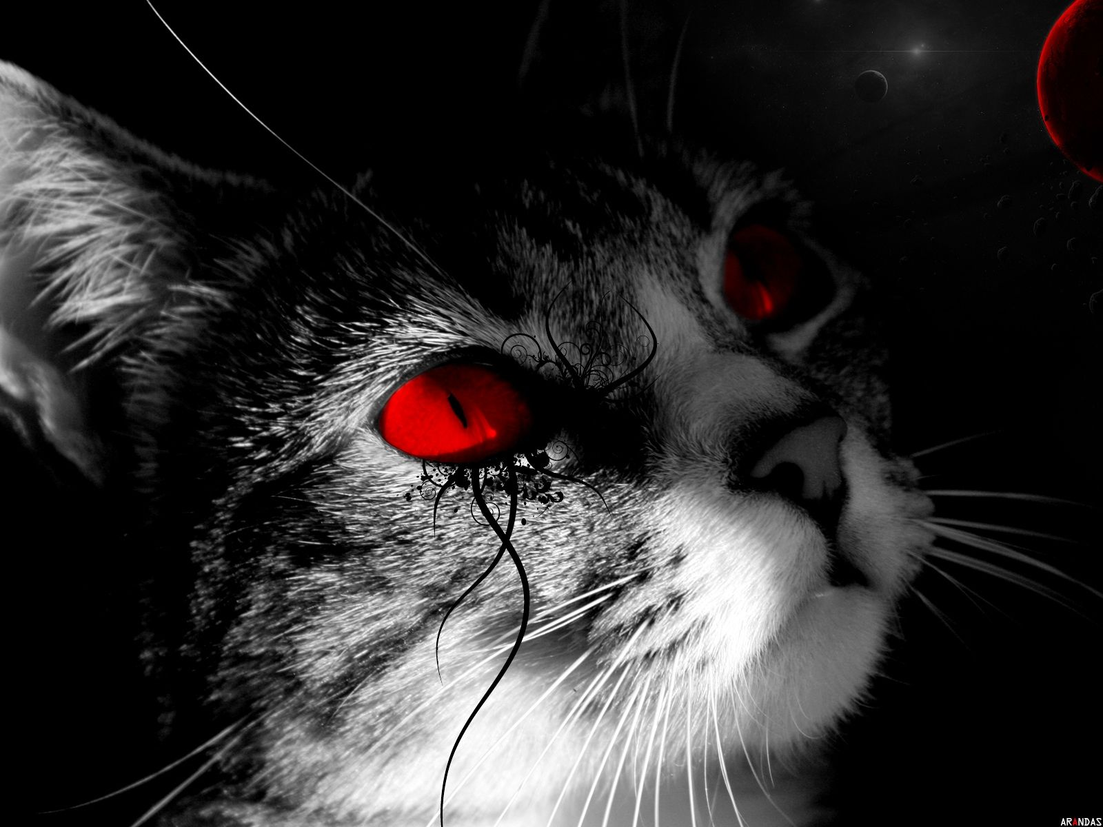 Moon Cats Red Eyes Selective Coloring Wallpaper 149534 Wallbase Cc Eyes Wallpaper Cats White And Black Cat