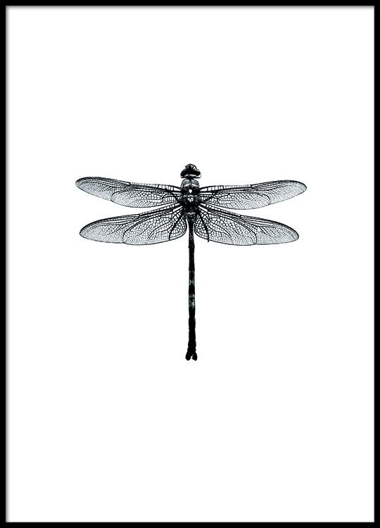 Poster with a black and white dragonfly swedish design