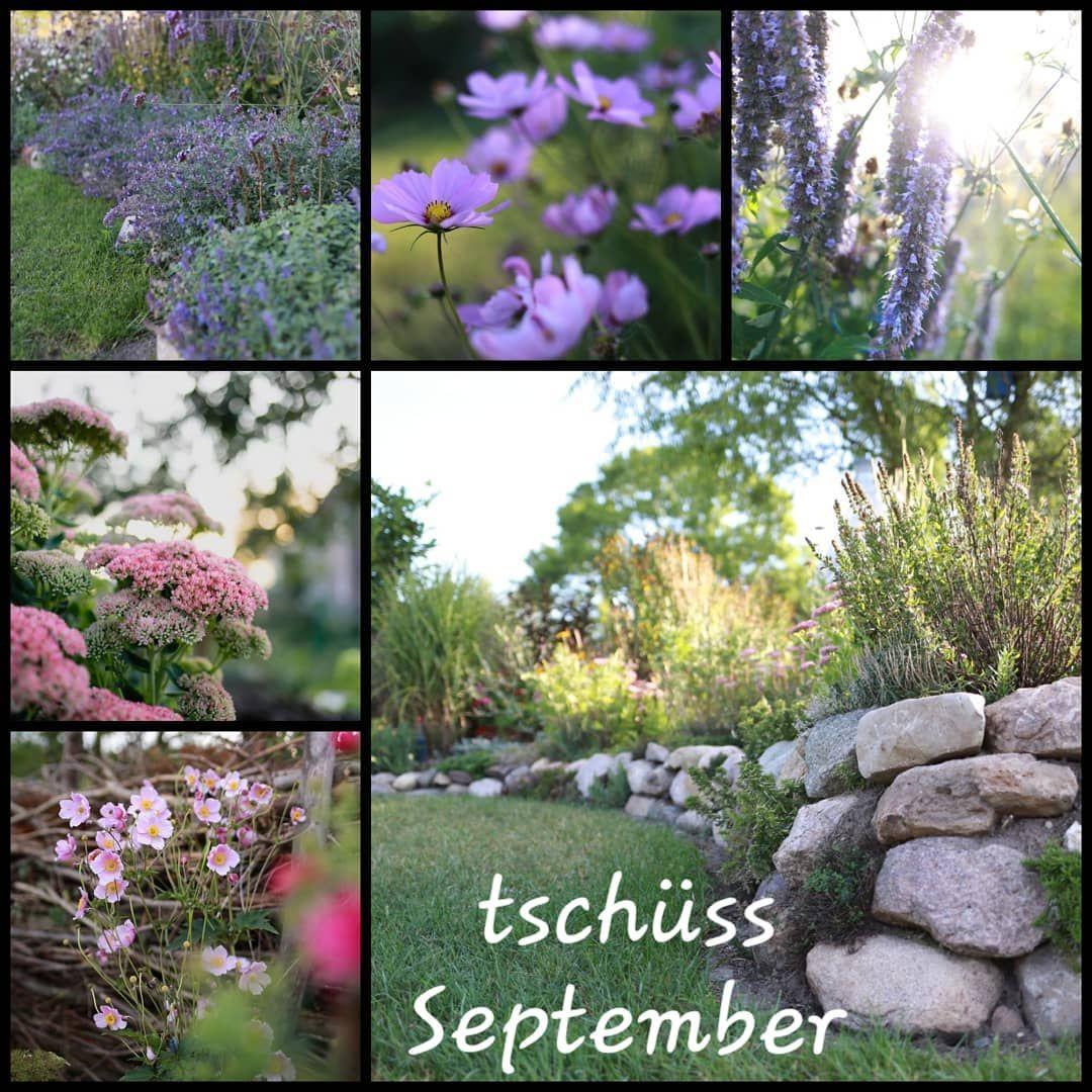 Der Nachste Monat Geht Voruber Der Herbst Ist Da Dies Ist Der 3 Herbst In Diesem Garten Wobei Er Noch Immer Entsteht Und Langst Nicht Ferti September Garden