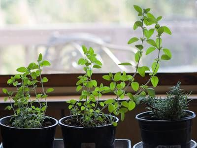 Start an indoor vegetable garden this winter is part of Winter garden Indoor - With enough light and heat, you can grow your own vegetables all year round