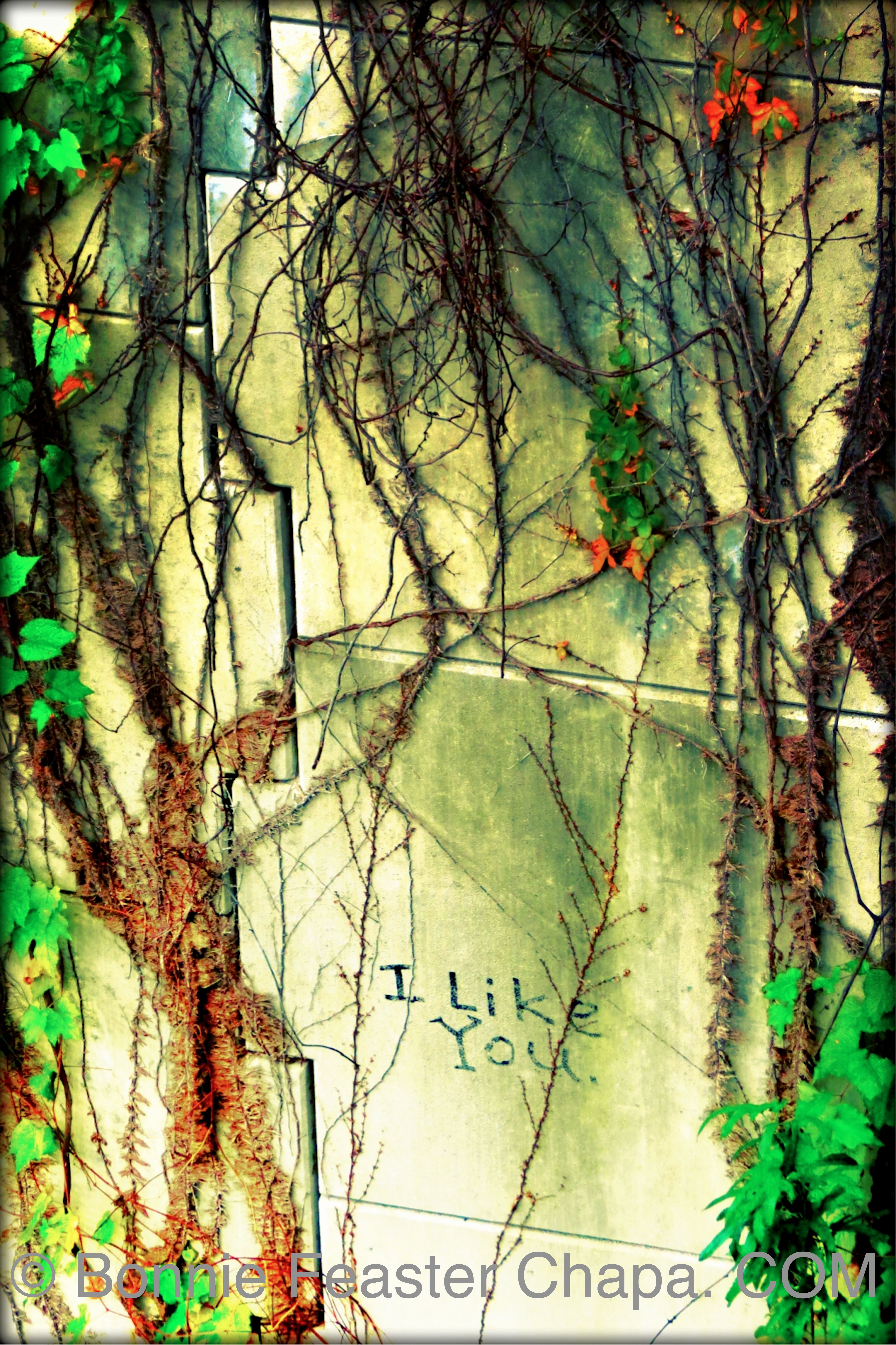 Giclee Print I Like You Austin Texas Street Art Graffiti Wall Art ...