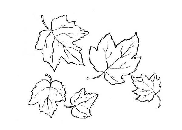Autumn Maple Leaf Coloring Page Kids Play Color Blattzeichnung Herbst Blatter Tattoo Ahornblatt Tattoo