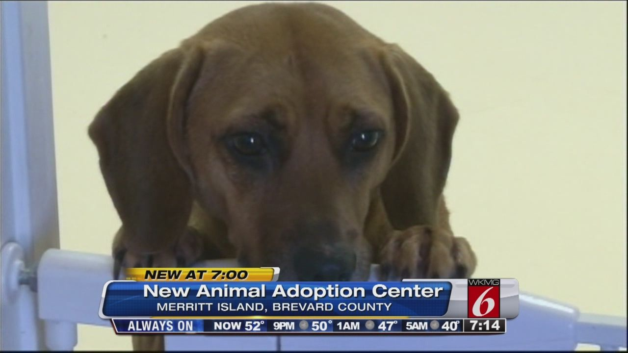 14+ Brevard county animal control images