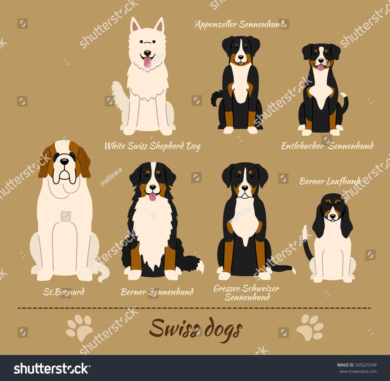 Illustration Of Seven Different Breeds Of Dogs White Swiss Shepherd Dog Appenzeller Sennenhund Entl Entlebucher Mountain Dog Dog Breeds White Swiss Shepherd