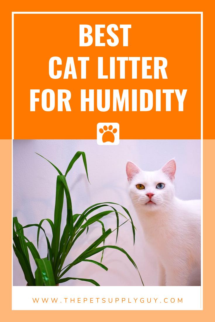 Best Cat Litter For Humidity Best Cat Litter Cat Litter Litter