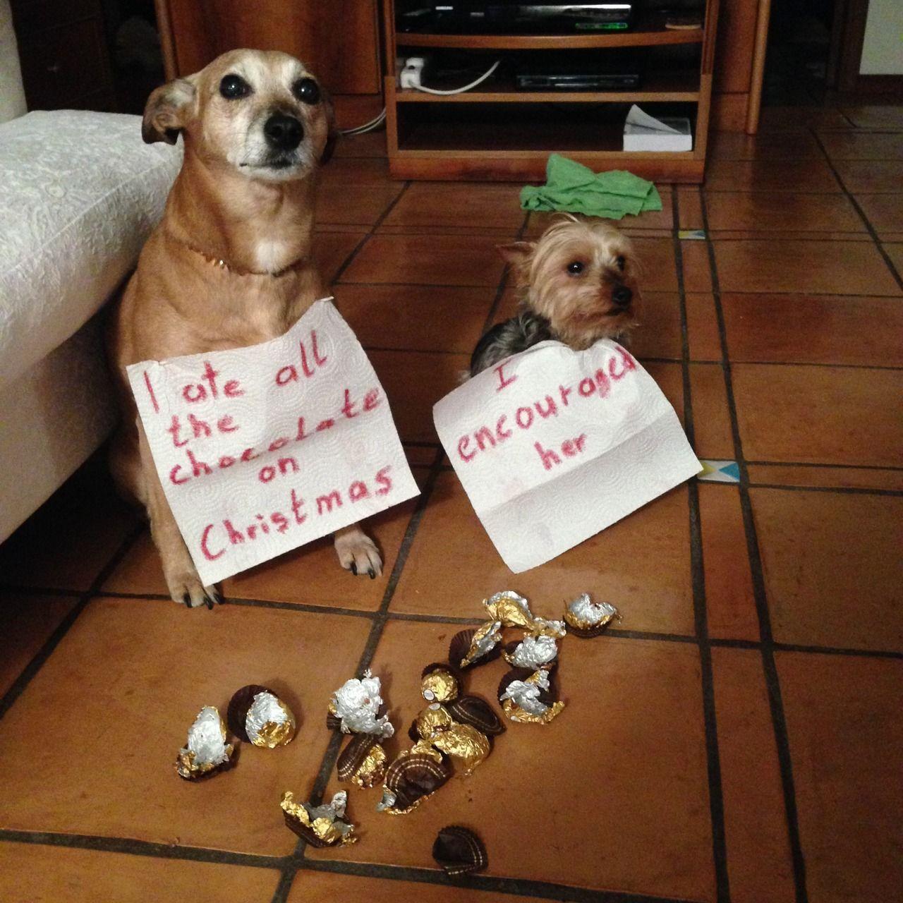 I ate all the chocolate on Christmas.