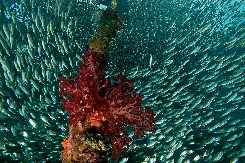 R4070509057 Underwater photography, Underwater