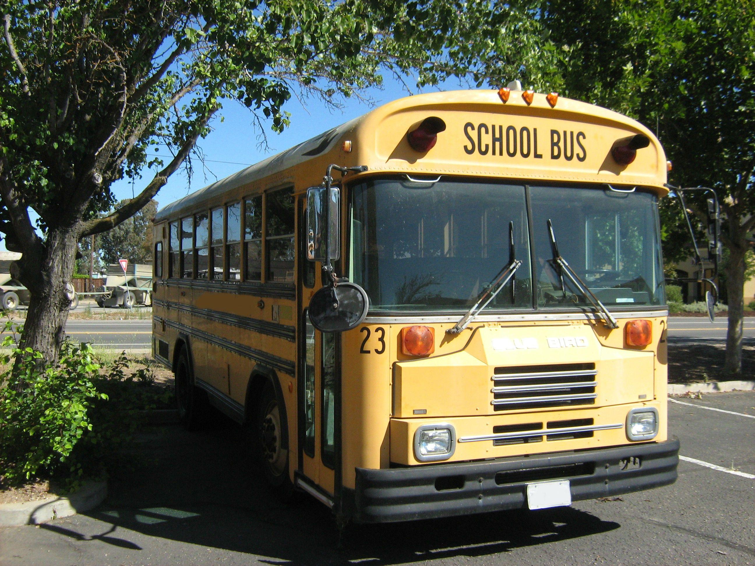 1991 Blue Bird TC2000 (With images) School bus, Bus