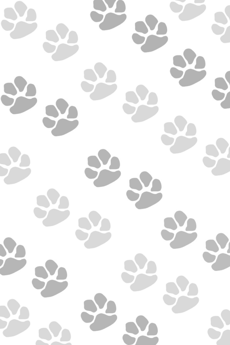 Pet Lover Instagram Story Template And Iphone Background Instagram Story Instagram Story Template Instagram Background