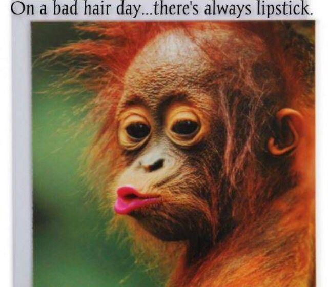 We All Have A Bad Hair Day Bad Hair Day Funny Monkeys Funny Haha Funny