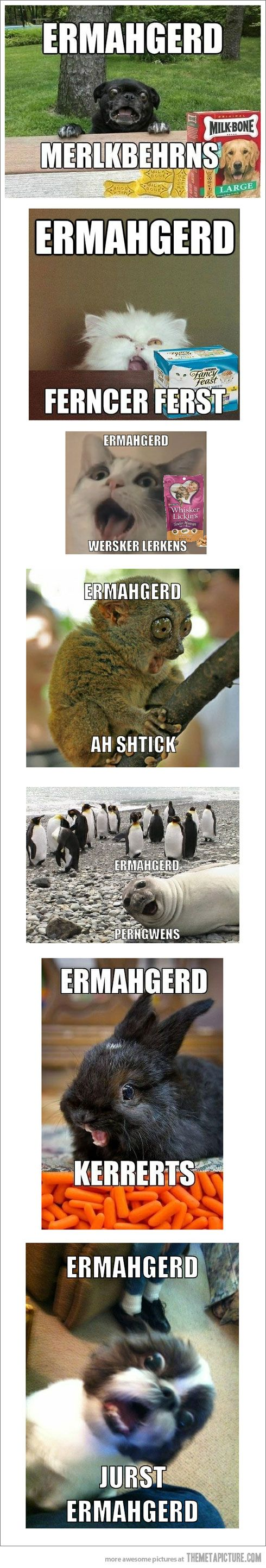 """Super Excited """"Ermahgerd"""" Animals 