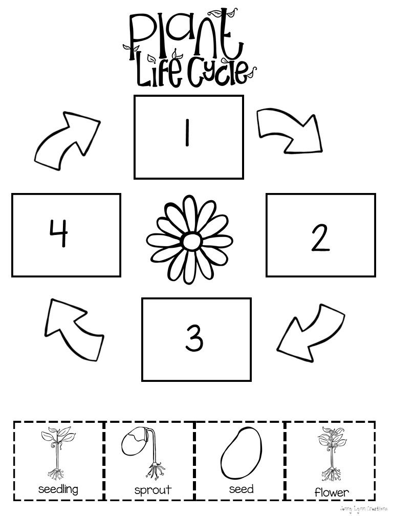 All About Plants | Kids | Plant life cycle worksheet, Plants, Plant ...