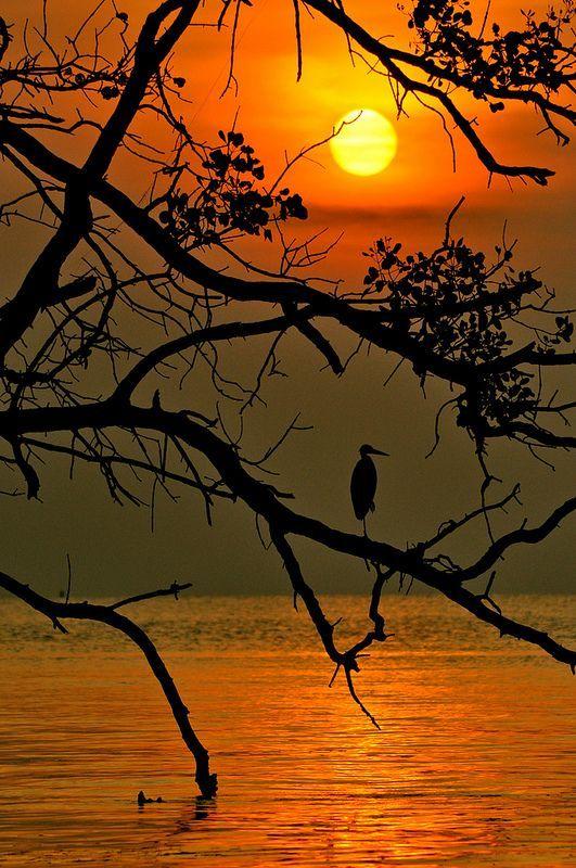 . in the stillness