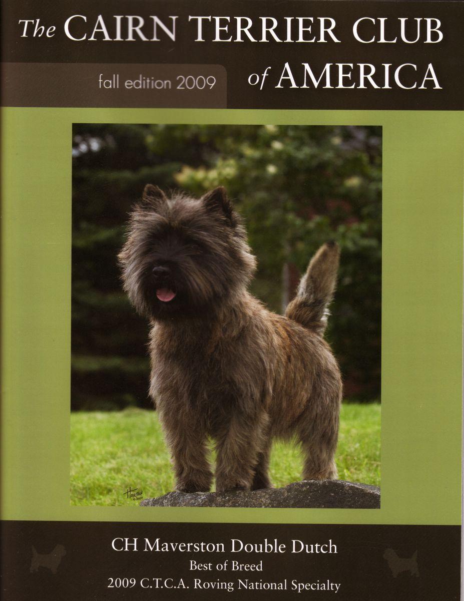 Ch Maverston Double Dutch Cairn Terrier Border Terrier