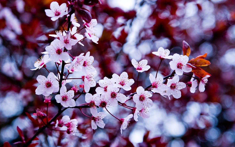 Imagen De Flores Hermosas Para Fondo De Pantalla: Imagenes+De+Flores+Para+Fondo+De+Pantalla+Gratis