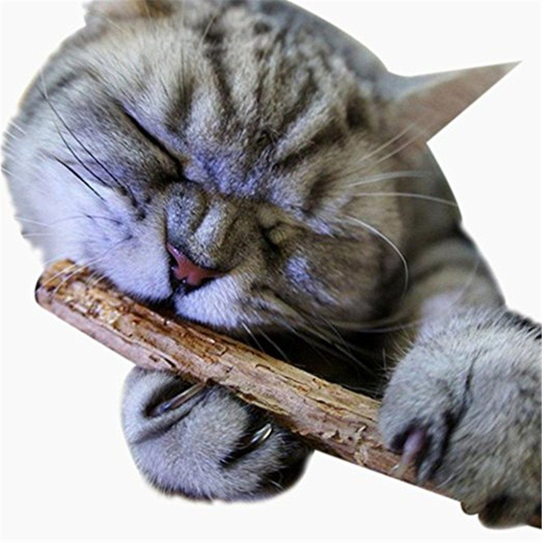 Floralby 2pcs Pet Cat Kitten Chew Stick Natural Wood Treat Catnip Toy Molar Chewing Tool Want To Know More Dog Teeth Cat Cleaning Cats And Kittens