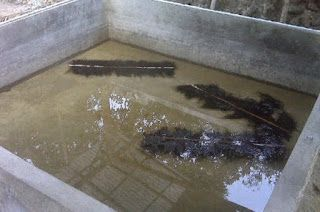 Cara Budidaya Ikan Lele Kolam Terpal Dan Beton Agar Cepat ...