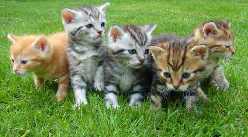 What Is the World Record for Number of Kittens Born in a