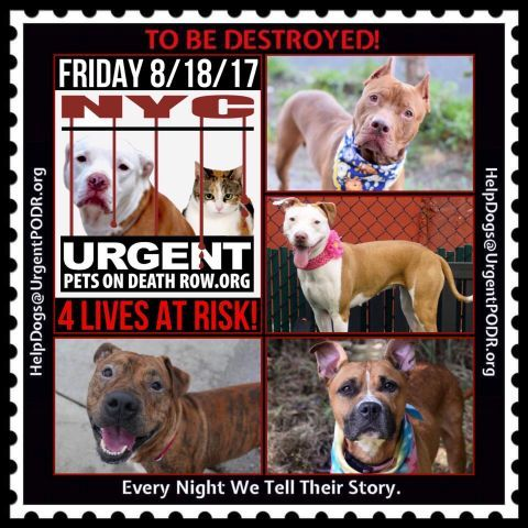 Dedicated To Saving Nyc Shelter Animals Cat With Blue Eyes Nyc Dogs Animal Help