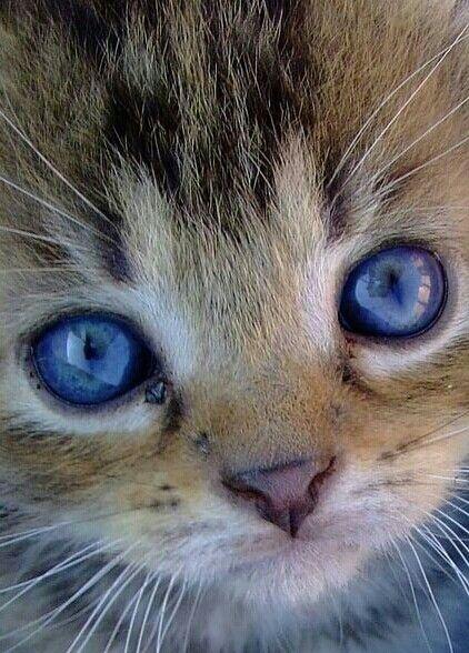 Gattino Dolcissimo Amici Gatti Cats Cute Cats E Kittens Cutest