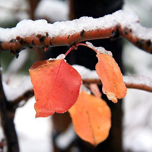 Winter has come.