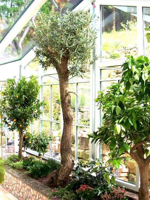 wintergarten wintergartenbepflanzung wintergarten pflanzen kaufen - tipps pflege pflanzen wintergarten