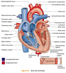 Heart parts flashcards quizlet school pinterest school heart parts flashcards quizlet ccuart Image collections