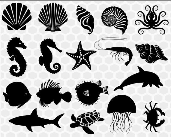 Ocean Svg Bundle Under The Sea Svg Seashell Svg Ocean Clipart Ocean Animals Svg Beach Svg Clip Cute Little Drawings Ocean Clipart Animal Silhouette