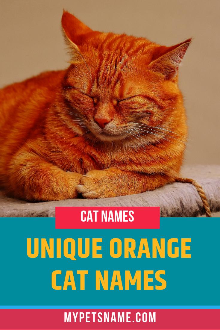 Unique Orange Cat Names Cat Names Unique Cat Names Orange Cat