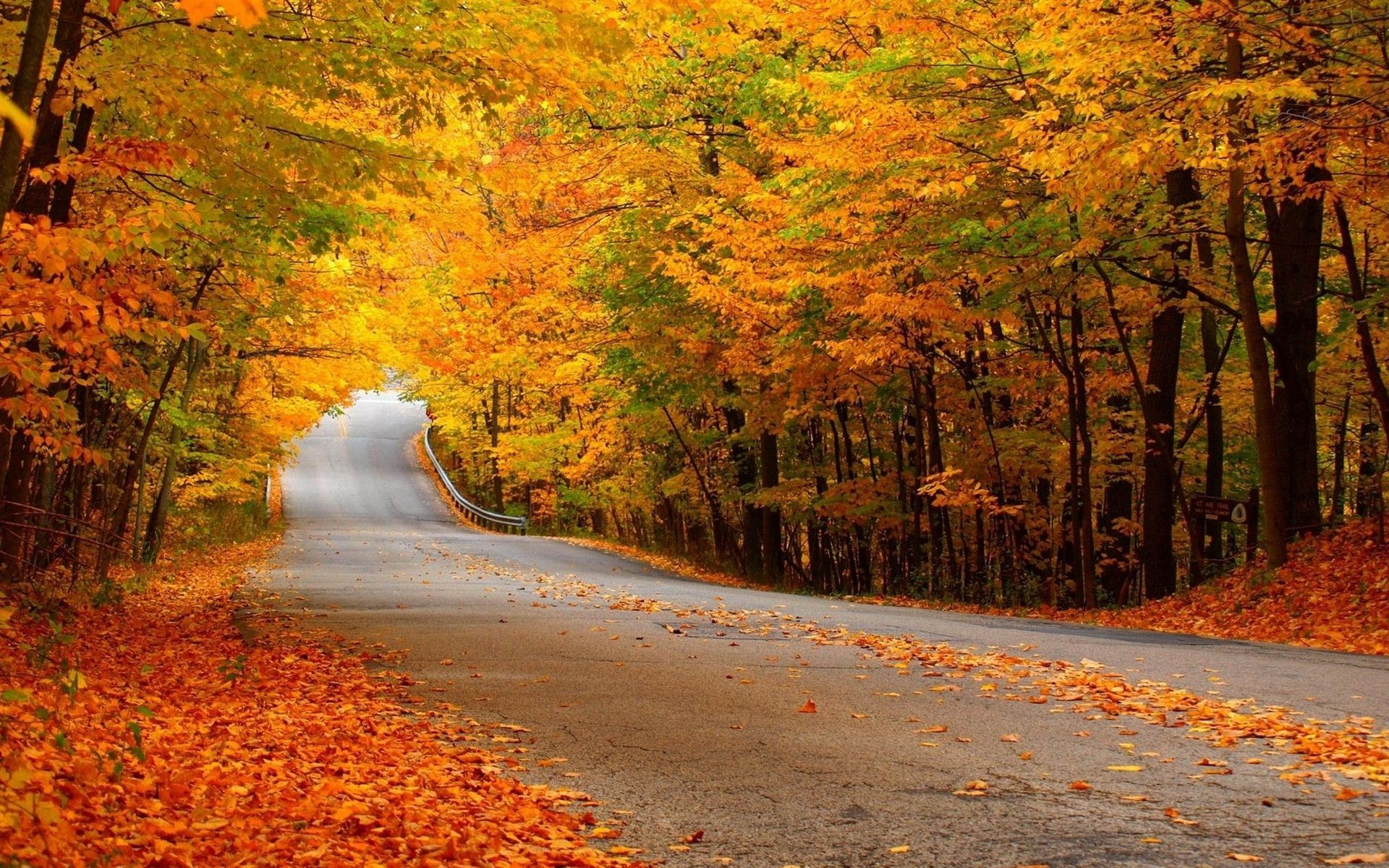 Yellow Leaves Road Forest Autumn With Images Autumn
