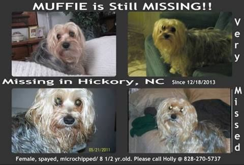 Lost Dog Hickory Nc Sighted Hickory Hs National Guard Armory